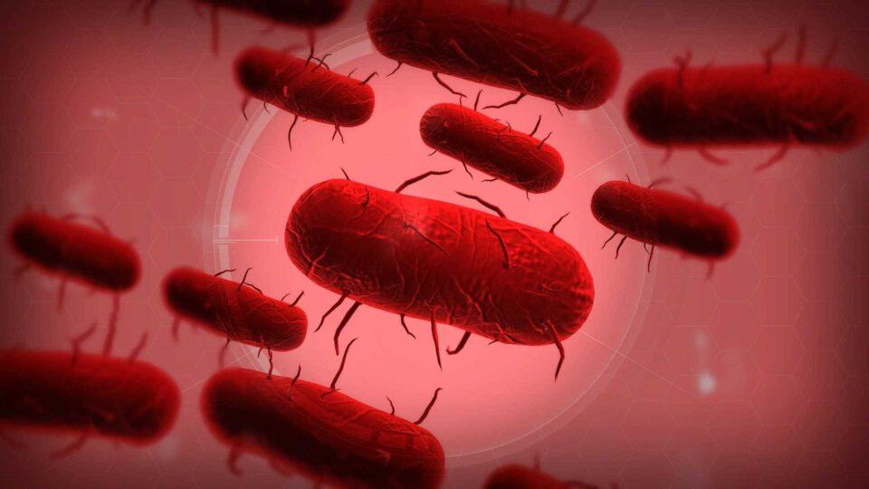 Бубонная чума бактерия